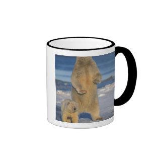 oso polar, maritimus del Ursus, cerda con el cacho Taza De Café