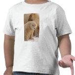 oso polar, maritimus del Ursus, cerda con el Camiseta