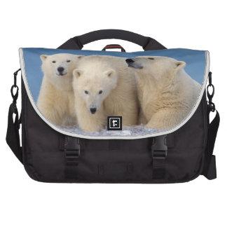 oso polar maritimus del Ursus cerda con los cach Bolsas De Portatil
