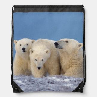oso polar maritimus del Ursus cerda con los cach Mochila