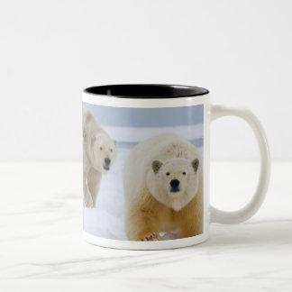 oso polar, maritimus del Ursus, cerda con los cach Tazas De Café