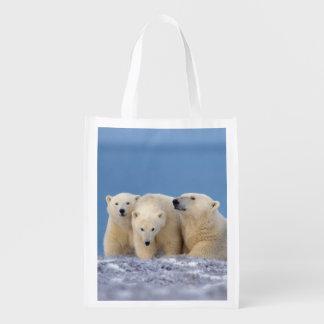 oso polar maritimus del Ursus cerda con los cach Bolsa De La Compra