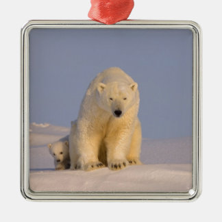 oso polar maritimus del Ursus cerda con recién n Ornamentos De Navidad