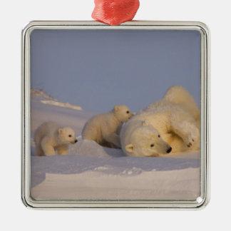 oso polar maritimus del Ursus cerda que juega co Ornamento Para Reyes Magos