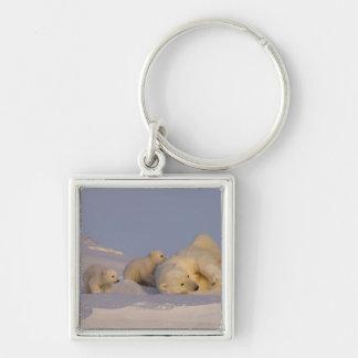 oso polar, maritimus del Ursus, cerda que juega co Llavero Cuadrado Plateado