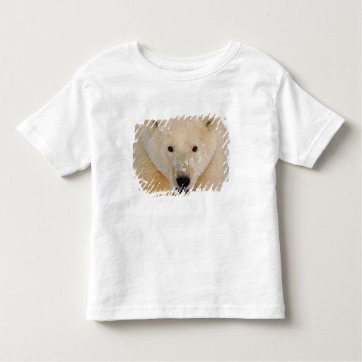 oso polar, maritimus del Ursus, cierre para arriba Remeras