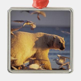 oso polar, maritimus del Ursus, con Adorno Navideño Cuadrado De Metal