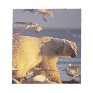 oso polar, maritimus del Ursus, con Bloc