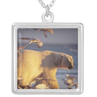 oso polar, maritimus del Ursus, con Colgante Cuadrado