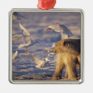 oso polar maritimus del Ursus con Adorno Para Reyes