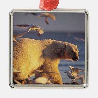 oso polar maritimus del Ursus con Ornamento De Navidad