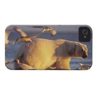 oso polar, maritimus del Ursus, con iPhone 4 Case-Mate Carcasas