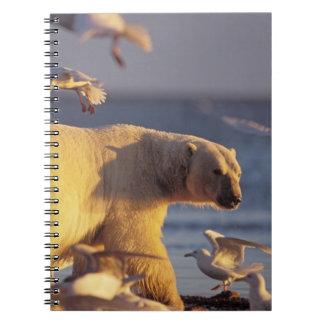 oso polar, maritimus del Ursus, con Libretas Espirales