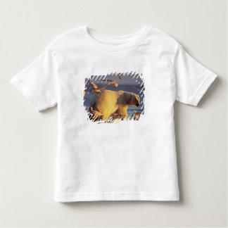 oso polar, maritimus del Ursus, con Playera De Niño