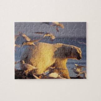oso polar, maritimus del Ursus, con Puzzles Con Fotos