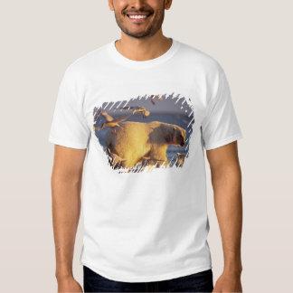 oso polar, maritimus del Ursus, con Remeras