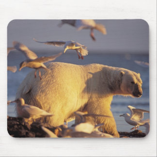 oso polar, maritimus del Ursus, con Tapete De Ratón