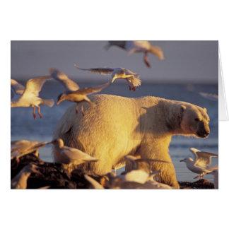 oso polar, maritimus del Ursus, con Tarjeta De Felicitación