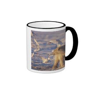 oso polar, maritimus del Ursus, con Tazas De Café
