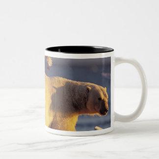 oso polar, maritimus del Ursus, con Taza De Dos Tonos