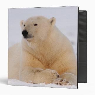 "oso polar, maritimus del Ursus, descansando sobre Carpeta 1 1/2"""