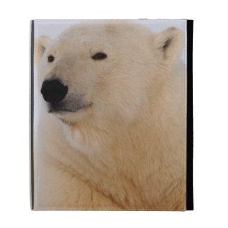 oso polar, maritimus del Ursus, descansando sobre