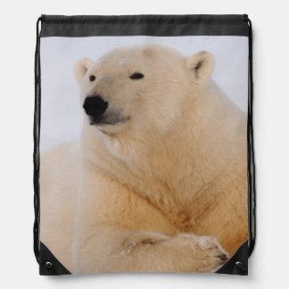 oso polar maritimus del Ursus descansando sobre Mochilas