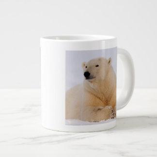 oso polar, maritimus del Ursus, descansando sobre Taza Grande