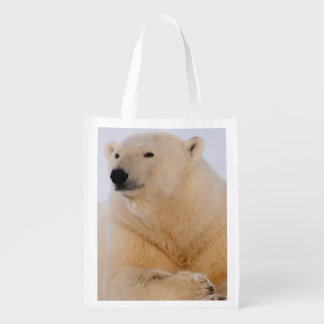 oso polar maritimus del Ursus descansando sobre Bolsa Reutilizable