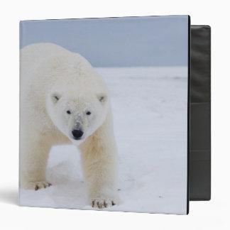 oso polar, maritimus del Ursus, en el hielo y la n