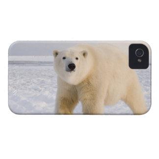 oso polar, maritimus del Ursus, en el hielo y la n iPhone 4 Case-Mate Protectores