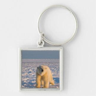 oso polar, maritimus del Ursus, en el hielo y la n Llavero Cuadrado Plateado