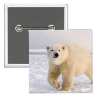 oso polar, maritimus del Ursus, en el hielo y la n Pin Cuadrada 5 Cm