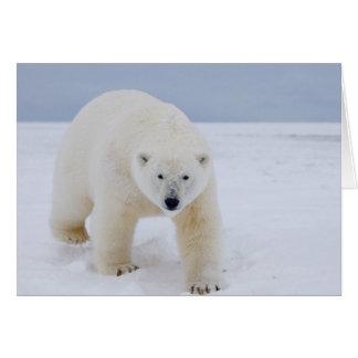oso polar, maritimus del Ursus, en el hielo y la n Tarjeta De Felicitación