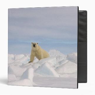 "oso polar, maritimus del Ursus, en hielo áspero en Carpeta 1 1/2"""