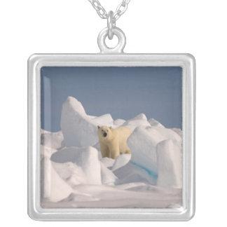 oso polar, maritimus del Ursus, en hielo áspero en Colgante Cuadrado