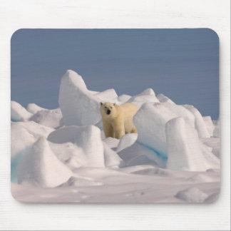 oso polar, maritimus del Ursus, en hielo áspero en Tapetes De Ratón