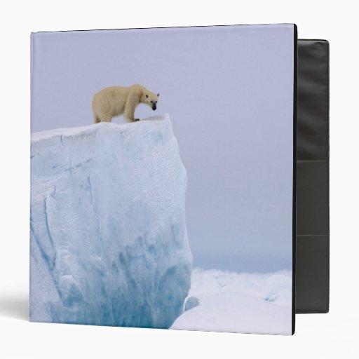 oso polar, maritimus del Ursus, en un gigante