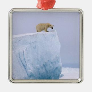 oso polar maritimus del Ursus en un gigante Ornaments Para Arbol De Navidad
