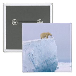 oso polar, maritimus del Ursus, en un gigante Pin Cuadrada 5 Cm