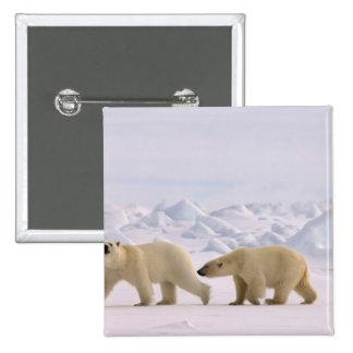 oso polar, maritimus del Ursus, par en hielo ásper Pin Cuadrada 5 Cm