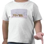 oso polar, maritimus del Ursus, par en hielo ásper Camiseta