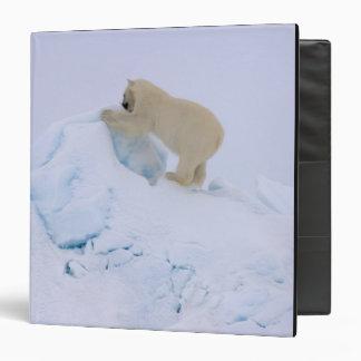 """oso polar, maritimus del Ursus, subiendo para arri Carpeta 1 1/2"""""""
