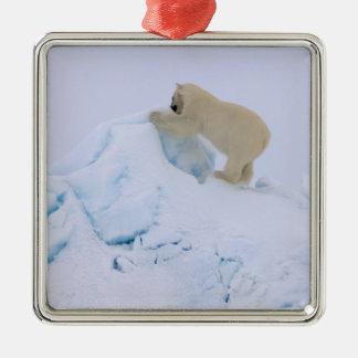 oso polar maritimus del Ursus subiendo para arri Ornamentos Para Reyes Magos