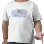 oso polar, maritimus del Ursus, subiendo para Camisetas