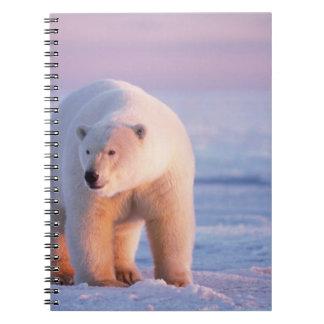 oso polar, maritimus del Ursus, verraco grande en Libros De Apuntes Con Espiral