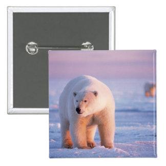 oso polar, maritimus del Ursus, verraco grande en Pin Cuadrada 5 Cm