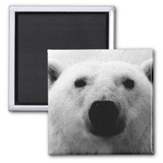 Oso polar negro y blanco imán de frigorifico