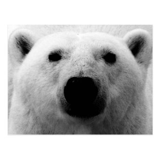 Oso polar negro y blanco postal