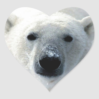 Oso polar pegatinas de corazon personalizadas
